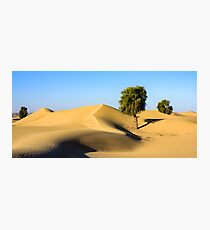 Forest in the Desert Photographic Print