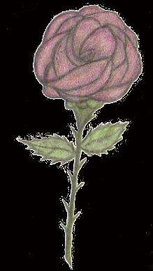 Roses Make Me Happy by Christi