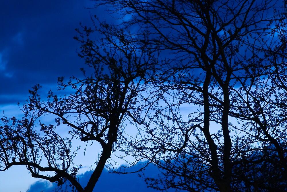 Blue tree by westie71