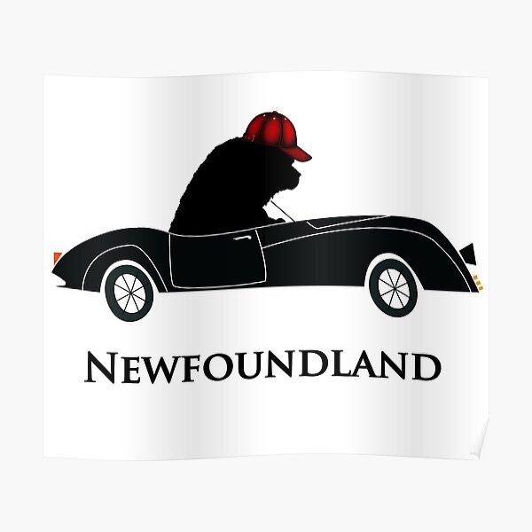 Newfoundland Dog Driving a Car Poster
