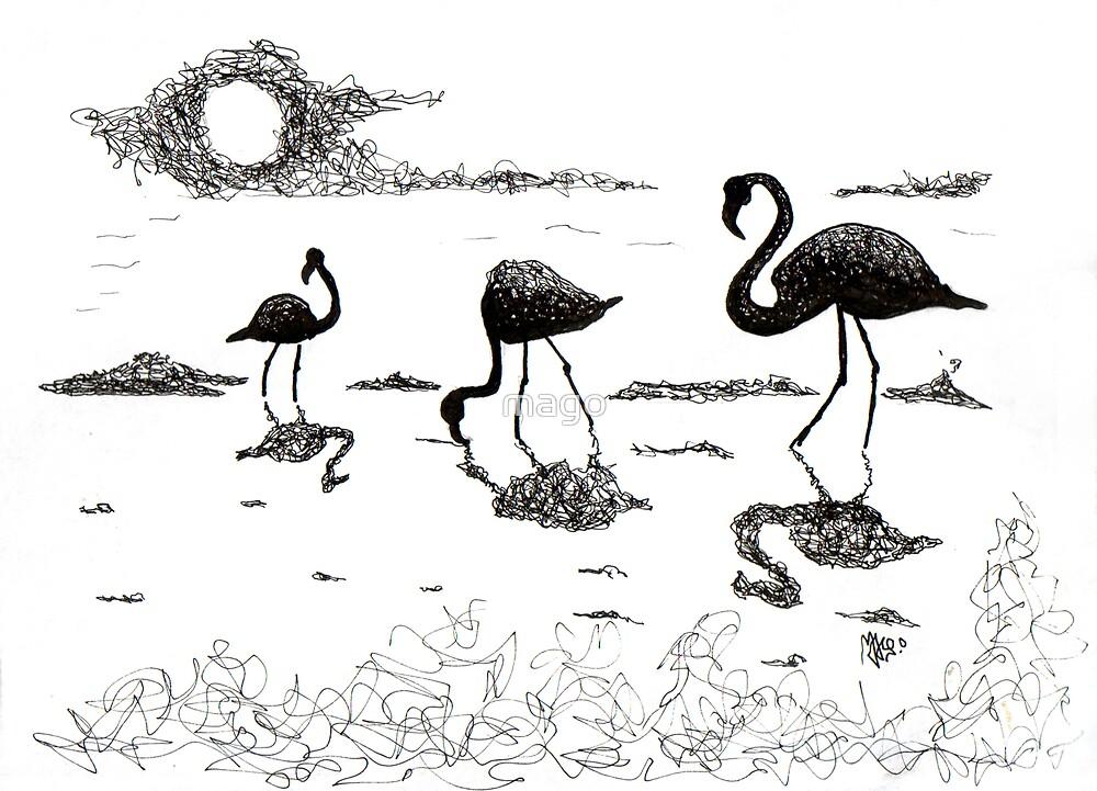 Flamingos by mago