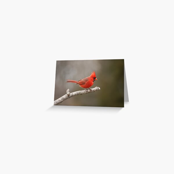 On the edge.... Greeting Card