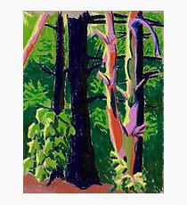 Trees in the Woods- Oil Pastel Art - Landscape Art Photographic Print