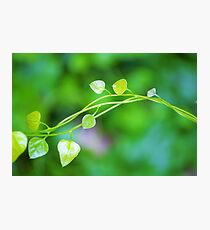 Cute Little Leaves on Intertwining vines  Photographic Print
