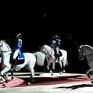 Lipizzaner Stallions by minskeep