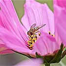 Pretty in Pink by John Thurgood