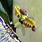 BUTTERFLIES AND OTHER WINGED INSECT *ON FLOWERS*– CLOSE UPS PLEASE !