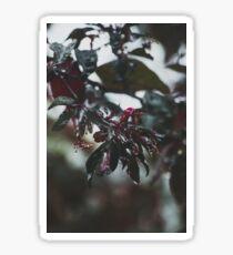 Dewy flower Sticker