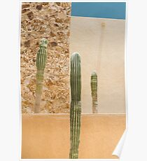Cabo Cactus III Poster