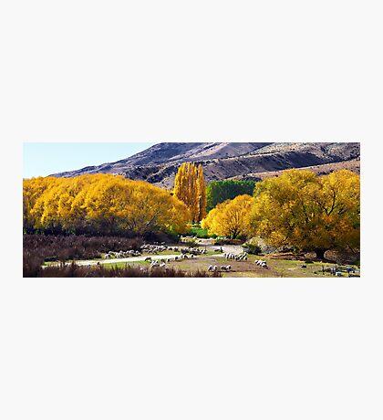 New Zealand Essence Photographic Print