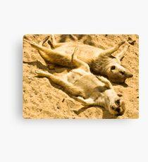 Playful Meercats Canvas Print
