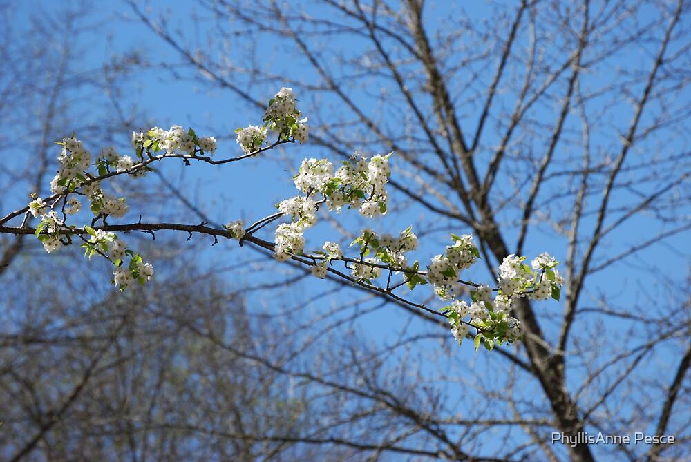 In Bloom by PhyllisAnne Pesce