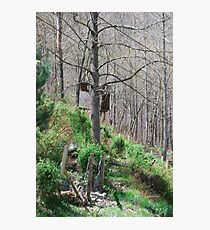 Nature's Easel Photographic Print