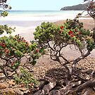 Pa Beach.....of sand, sea and blooms ! by Roy  Massicks