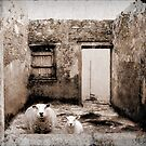 Saving the sheep by Kurt  Tutschek