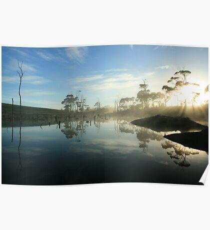 Forest morning in far nor west Tasmania , Australia Poster