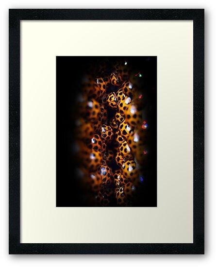Ladybird Cavern by Steve Chapple