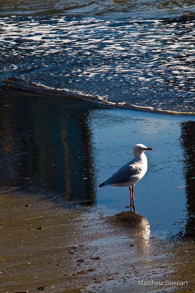 The Bird by Matthew Stewart