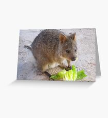 Breakfast time!   Rottnest Island 6 Greeting Card