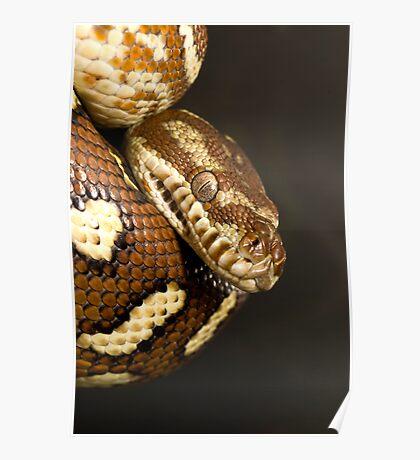 Bredl's Python Poster