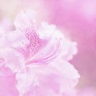 Soft and Lovely Pink Rhododendrons by Anita Pollak