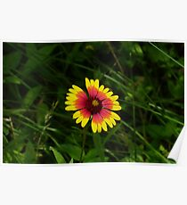 Bright Young Flower Poster