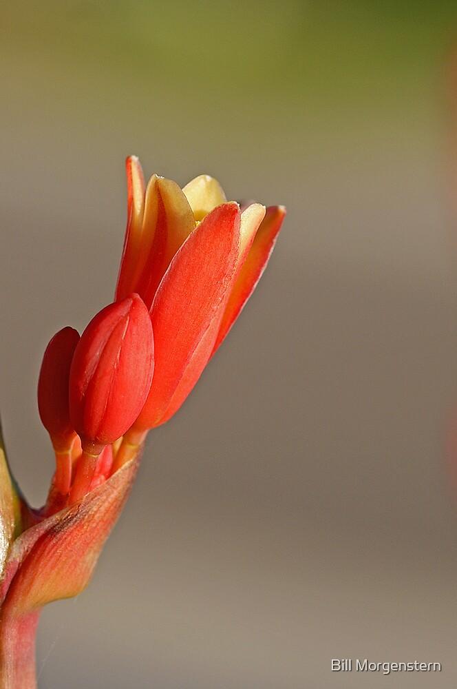 Spring Delight by Bill Morgenstern