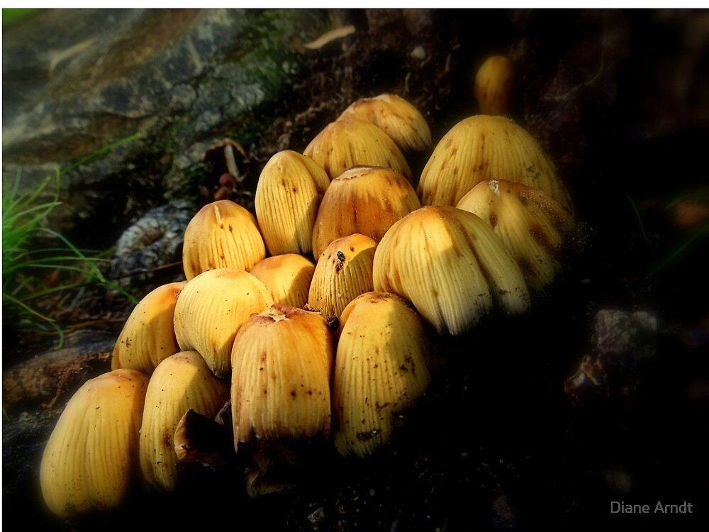 Mushroom Season 2013. Oregon by Diane Arndt
