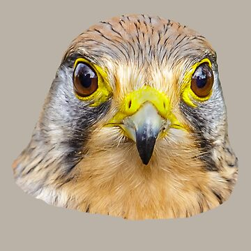 Eyes of a Falcon by Dalyn