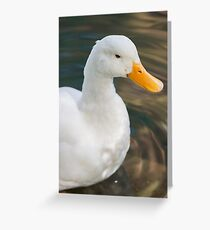 duck on lake Greeting Card