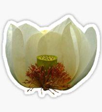 White Lotus Flower Photography Sticker