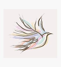 Colorful Dove Photographic Print