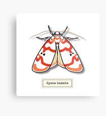 Moth01 Metal Print