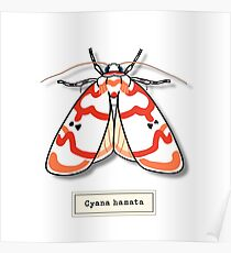 Moth01 Poster