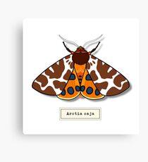 Moth02 Canvas Print