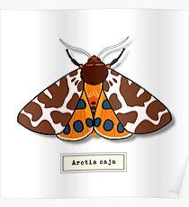 Moth02 Poster