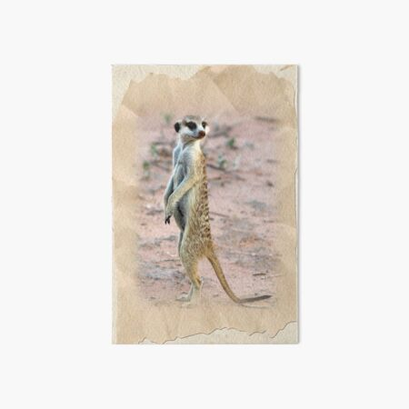 Meerkat Sentinel Art Board Print
