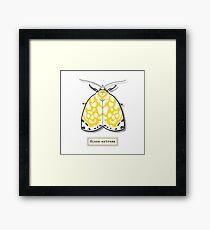 Moth03 Framed Print