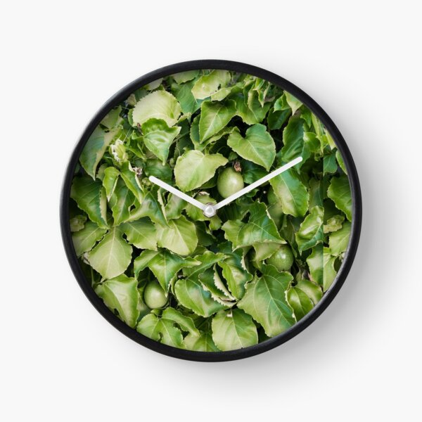 Passion-fruit Plant with Fruit Clock