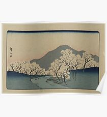 Grove of Cherry Trees - Japanese pre 1915 Woodblock Print Poster