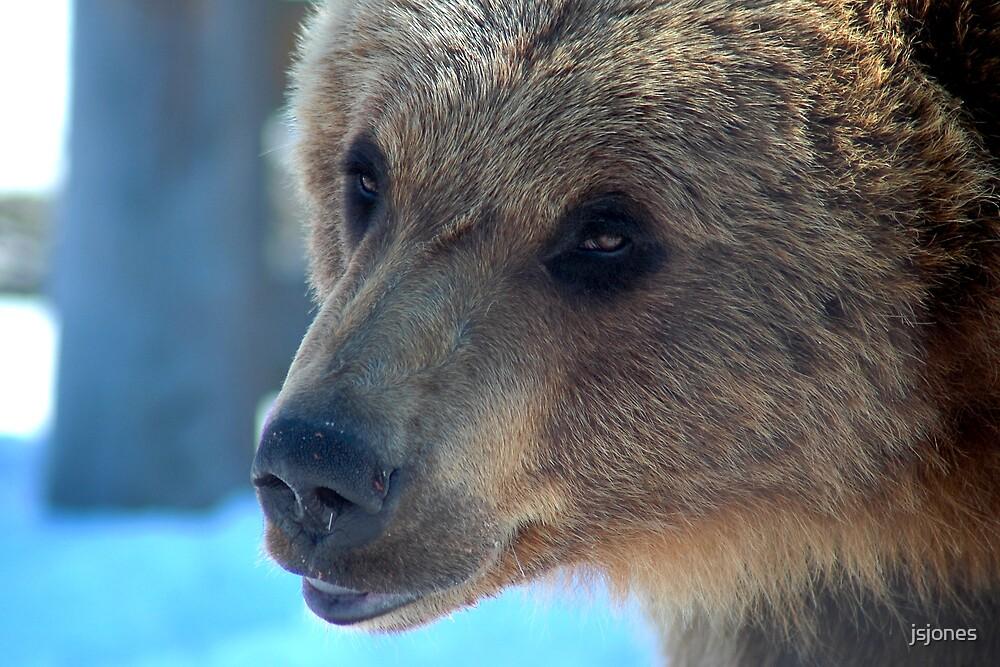 Ursus arctos horribilis by jsjones