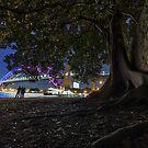 Vivid Sydney by yolanda