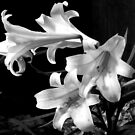 Droplets On The Lillies by Ruth Palmer