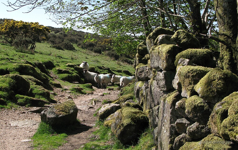 natives of Dartmoor by naturalimages