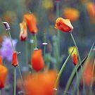 in the garden by bogfl