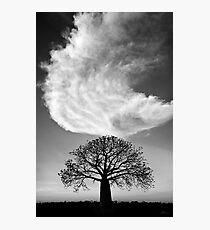 Sky Tree Photographic Print