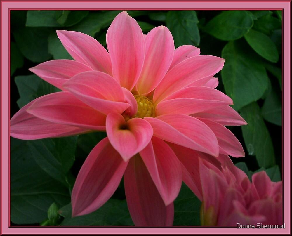 Pleasure by Donna Sherwood