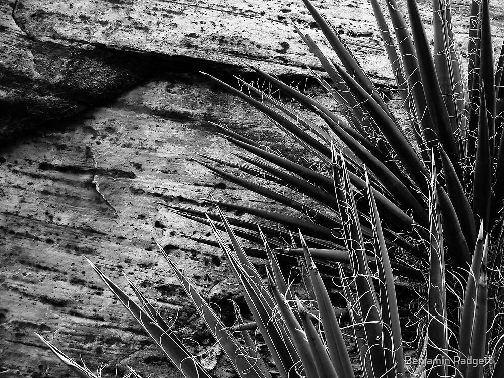Yucca & Stone by Benjamin Padgett
