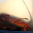 SHRIMP LOBSTER by SofiaYoushi