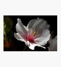 Soft Light Photographic Print